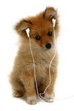 Adorable Puppy Listening to Music Royalty Free Stock Photos