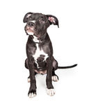 Adorable Puppy Looking Up for Approval Royalty Free Stock Photos