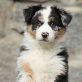 Adorable puppy looking at you Stock Images