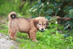 Adorable puppy lying on the green grass in the garden stock photo