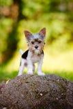 Adorable puppy outdoors Royalty Free Stock Photos