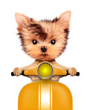 Adorable puppy sitting on a motorbike Royalty Free Stock Photography