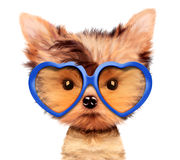 Adorable puppy with sunglasses, isolated on white. Funny adorable puppy with sunglasses, isolated on white. Realistic illustration of yorkshire terrier with Royalty Free Stock Photo