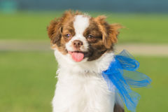 Adorable puppy stock photos