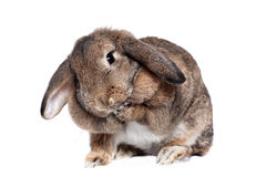 Adorable rabbit Royalty Free Stock Photography