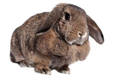 Adorable rabbit Royalty Free Stock Images