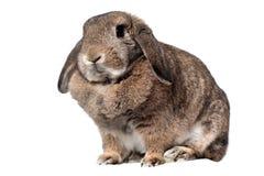 Adorable rabbit Stock Photos