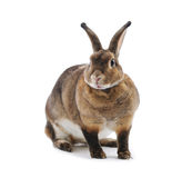 Adorable rabbit Stock Photo