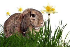 Adorable rabbit in green grass Stock Photography