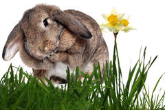 Adorable rabbit in green grass Stock Images