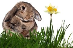 Adorable rabbit in green grass Royalty Free Stock Photography