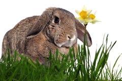 Adorable rabbit in green grass Royalty Free Stock Photos