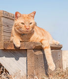 Adorable red tabby cat resting Stock Photo