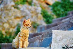 Adorable red tabby cat on a street. In Medina of Chefchaouen, Morocco, small town in northwest Morocco known for its blue buildings Royalty Free Stock Photography