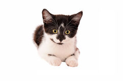 Adorable sad black and white kitten Stock Image