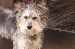 Adorable shaggy dog Royalty Free Stock Images