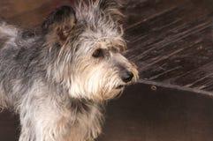 Adorable shaggy dog Stock Photography