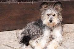 Adorable shaggy dog Royalty Free Stock Image