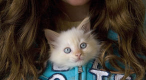Adorable Shelter Kitten. An adorable 7-week old kitten, saved from a shelter.  Kitten is zipped into a teenage girl's sweatshirt and is poking her head out from Stock Photos