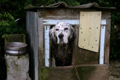 Adorable shetter dog in its wooden house Royalty Free Stock Photo