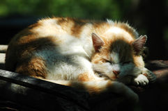 Adorable sleeping cat Stock Images