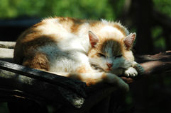 Adorable sleeping cat Royalty Free Stock Image