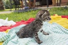 Adorable and sleepy tabby kitten Royalty Free Stock Photos