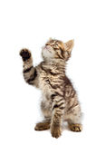 Adorable small cat on white bottom Stock Photo