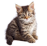 Adorable small cat on white bottom Royalty Free Stock Photo