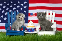 Two patriotic kittens on lawn chairs with flag and a cupcake stock photography