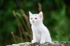 Adorable small kitten posing outdoors in summer Stock Photography