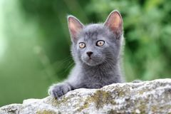 Adorable small kitten posing outdoors in summer Stock Image