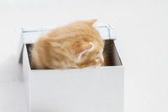 Adorable, small kitten stuck in a gift box, cuddly animal sweet Stock Photo