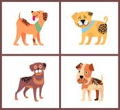 Adorable Small Puppies with Happy Excited Faces. Weimaraner in neckerchief, plump bullmastiff, cute rottweiler and boxer puppy vector illustrations Stock Images