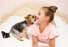 Adorable smiling happy little girl child playing with puppy yorkshire terrier. At home stock images