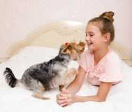 Adorable smiling happy little girl child playing with puppy yorkshire terrier. At home stock photo