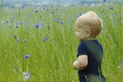 Adorable smiling toddler in high summer grass. Copy space.  stock images