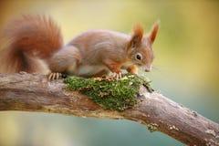 Adorable squirrel Stock Photo