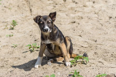 Adorable stray, mixed-breed puppy having rest in a sandy place. Portrait of adorable stray, mixed-breed puppy having rest in a sandy place Stock Image