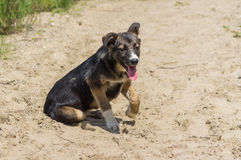 Adorable stray puppy having rest in a sandy place. Portrait of adorable stray puppy having rest in a sandy place Royalty Free Stock Photography