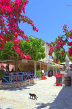 Adorable street in Greek village Royalty Free Stock Photo