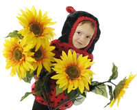 Adorable Sunflower Bug Stock Images