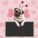 Adorable sweet pug puppy dog hanging on blank blackboard sign on pink background with hearts Stock Photo