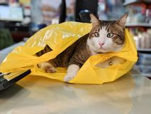 Adorable tabby cat playing with yellow plastic bag on table royalty free stock images