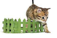 Adorable tabby kitten gets out of green box Stock Photography