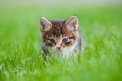 Adorable tabby kitten portrait Stock Images