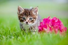 Adorable tabby kitten portrait Stock Photography
