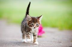 Adorable tabby kitten portrait Royalty Free Stock Image