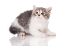 Adorable tabby kitten Royalty Free Stock Photography