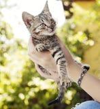 Adorable tabby kitten Stock Photo